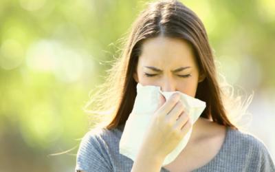 Melisse, wenn's kitzelt! Duftende Akut-Tipps für die Pollenzeit